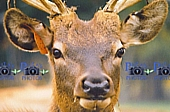 Wildlife Photography - Deer